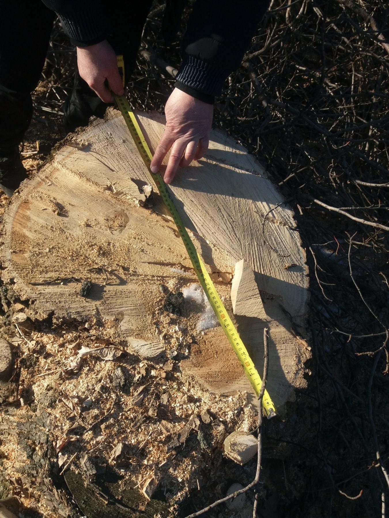 На Лозівщині чоловіки незаконно вирубували дерева, фото-1
