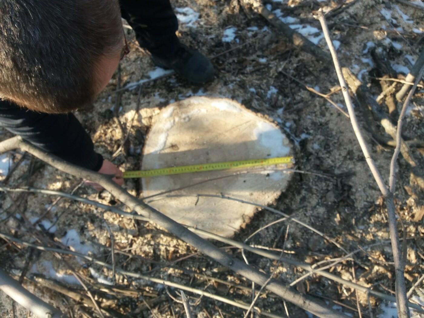 На Лозівщині чоловіки незаконно вирубували дерева, фото-2