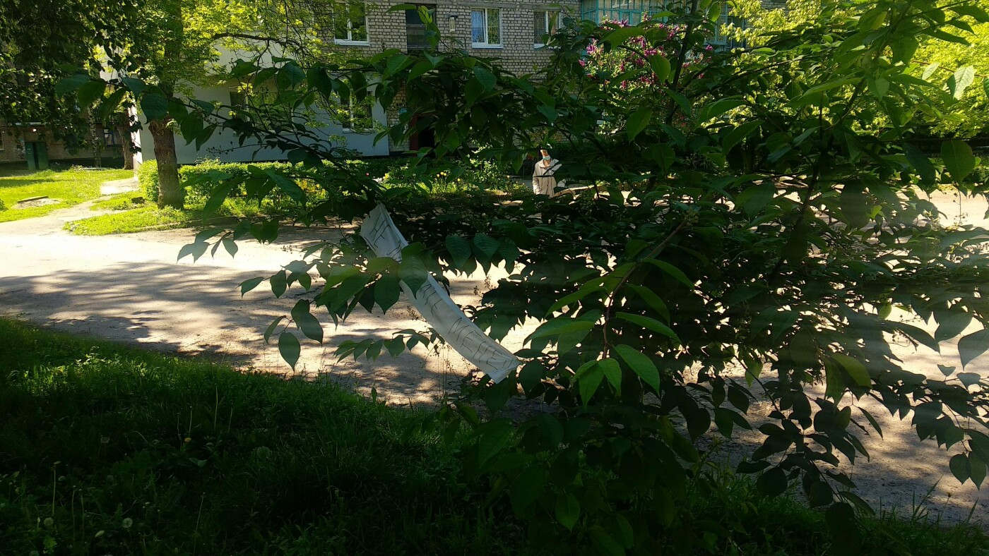 «Не ламайте мене»: лозівчанка знайшла спосіб, як зберегти молоді дерева цілими, фото-2