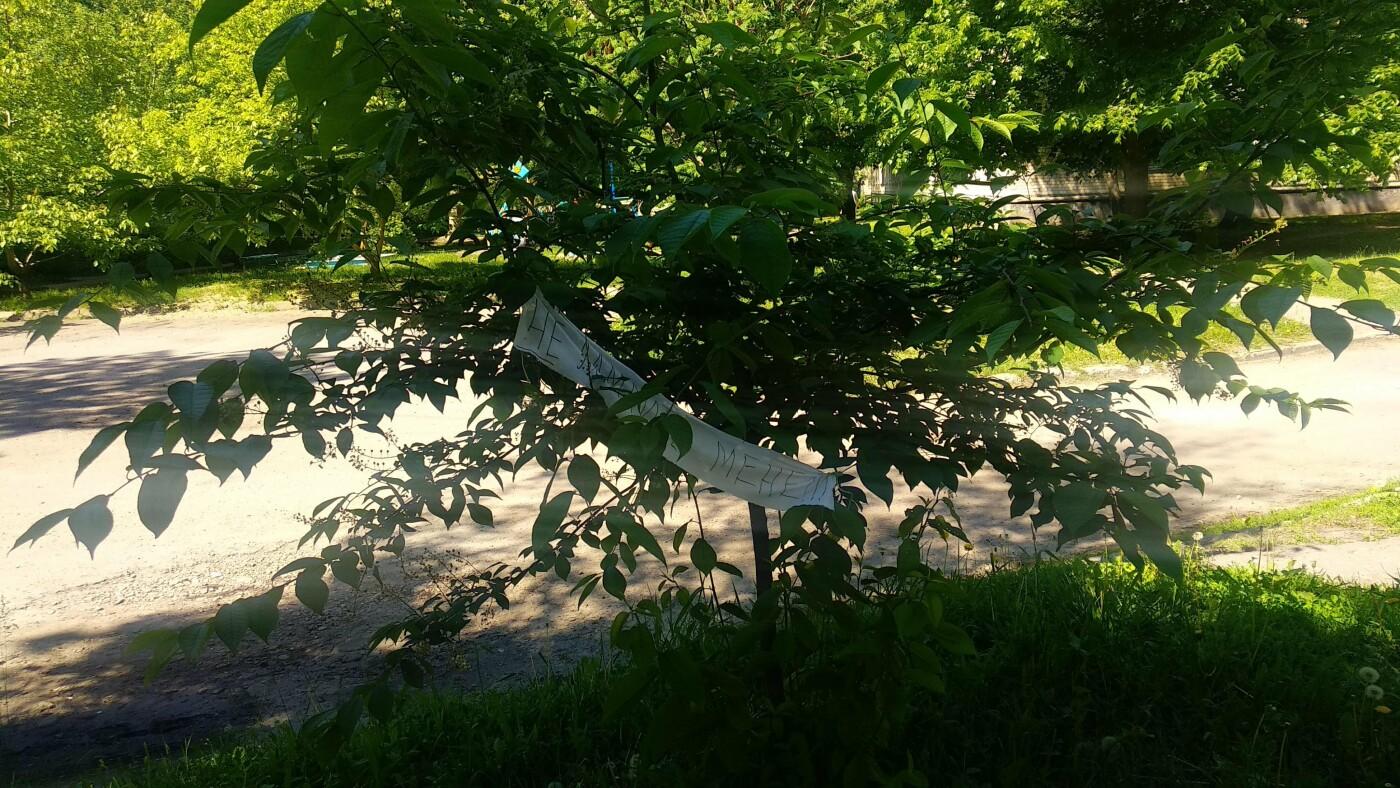 «Не ламайте мене»: лозівчанка знайшла спосіб, як зберегти молоді дерева цілими, фото-3
